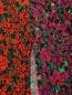 Юбка-миди из вискозы с цветочным узором Finders Keepers  –  Деталь1